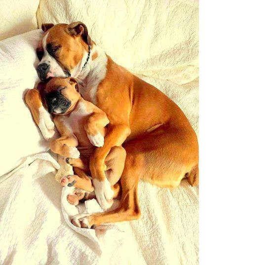Dog Treats Recall June