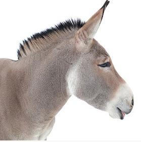 Donkey ride restrictions