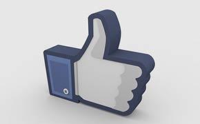 Papillon-Piloten auf Facebook